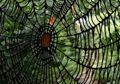 London's leading stained glass studio – Garden room Unusual and unique Spider's Web stained Glass Design by Deko Studio London